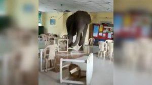 Βεγγάλη: Ελέφαντας ειβάλλει σε στρατιωτική καντίνα και γίνεται viral